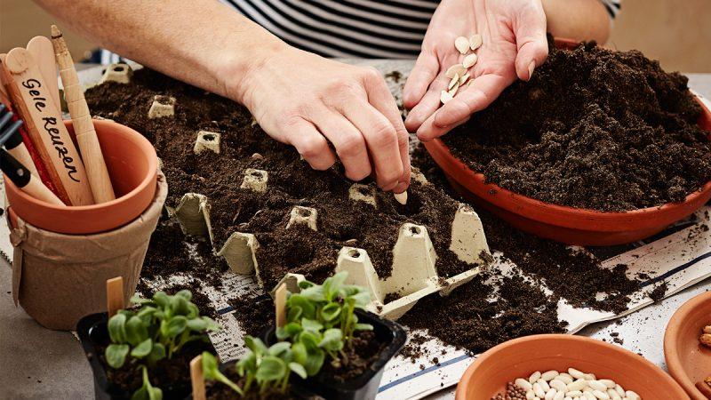 Kekkilän Kylvömulta tarjoaa ihanteellisen alustan siementen kylvämiseen