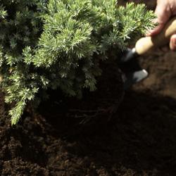 Lisää kasveille sopiva multa