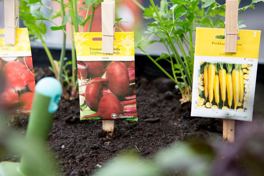 Taimet istutettu Kekkilä Luonnonmukaiseen kasvualustaan