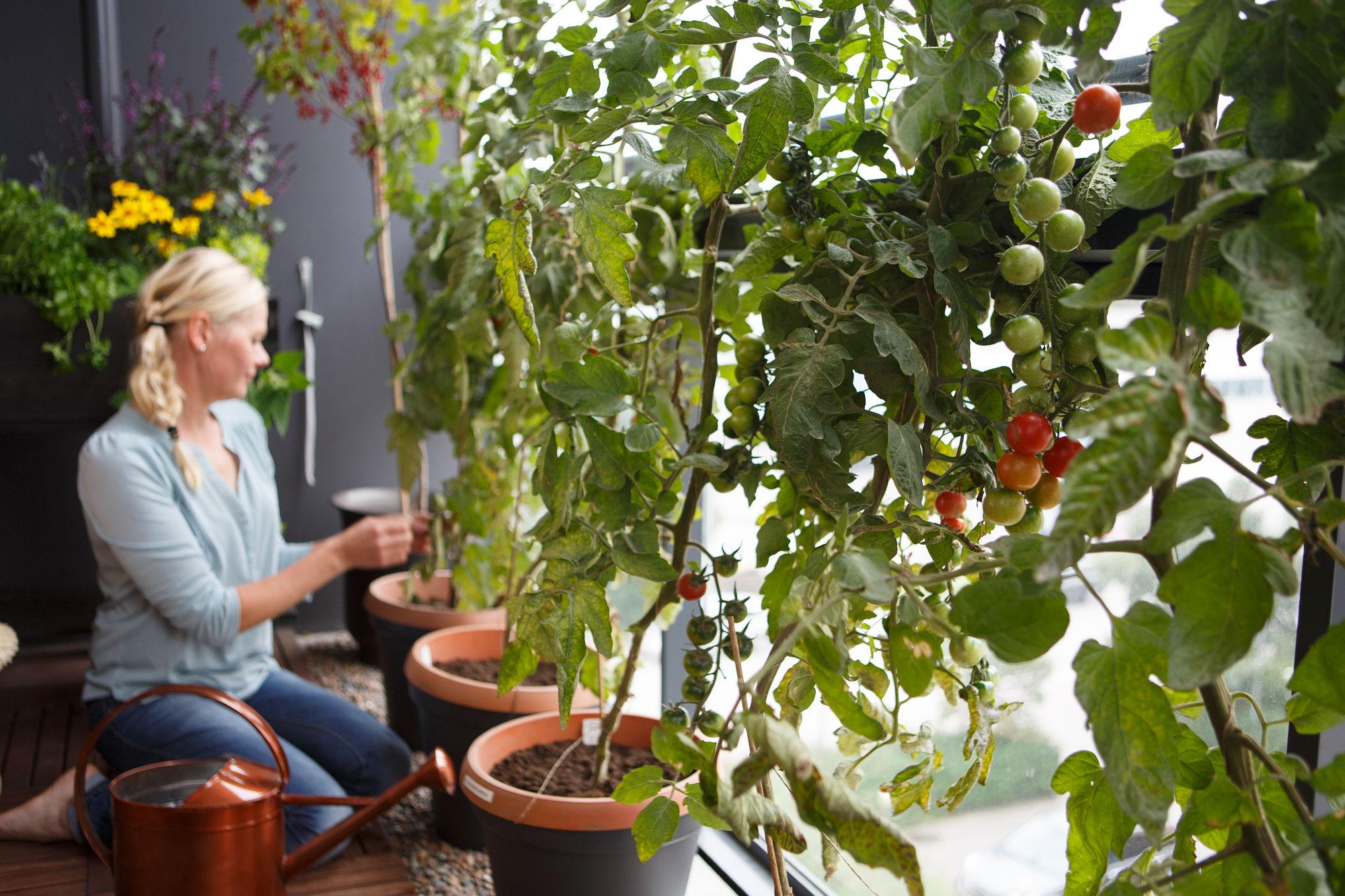 Kekkilä tomaattimulta luonnonmukainen
