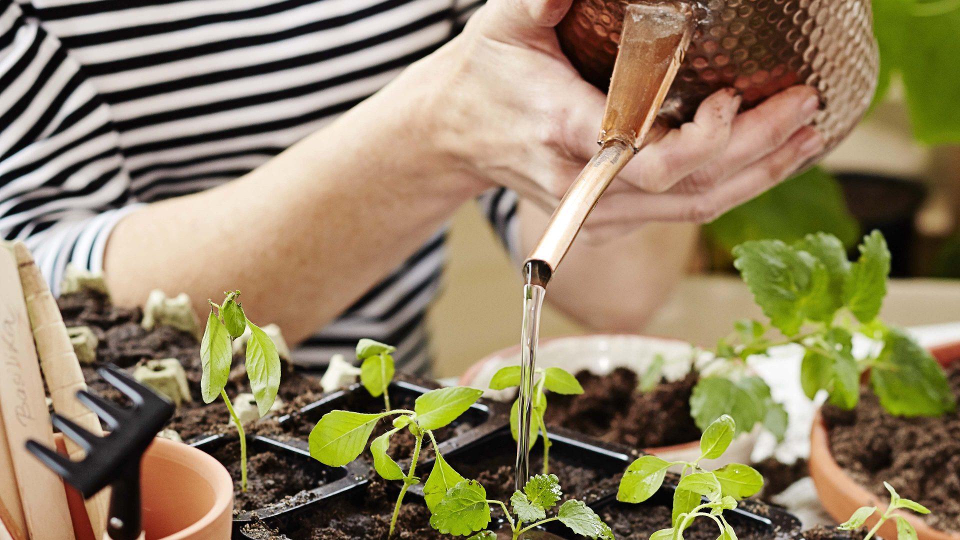 Kasvateaan iloa: Omat luomutaimet