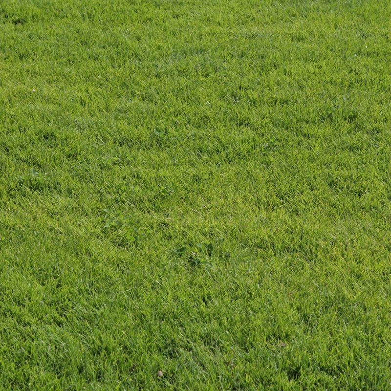 Kekkilä Nurmikkolannoite antaa tasaisen ja vahvan kasvun
