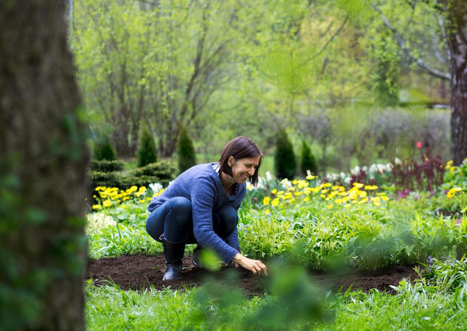 kevätpuutarhan siistiminen kalkitus ja lannoitus