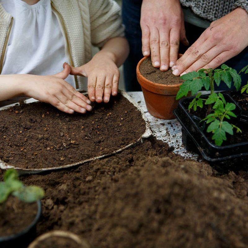 Kekkilä Luonnonmukainen kylvö- ja taimimulta käytöss