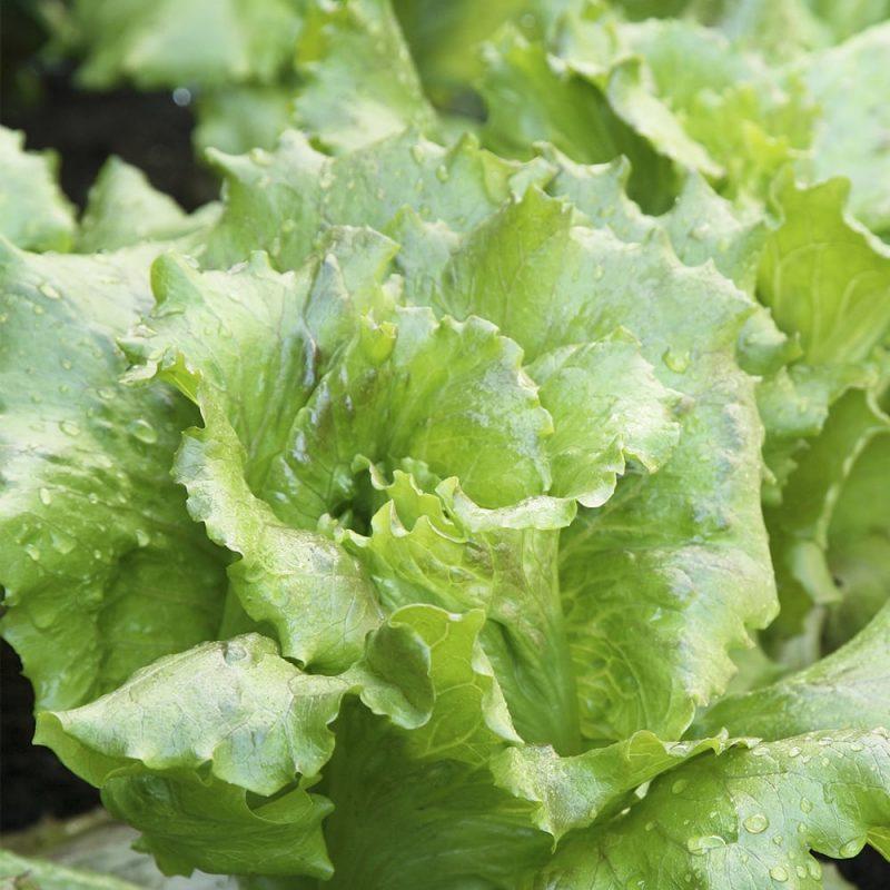 Salaattikerä