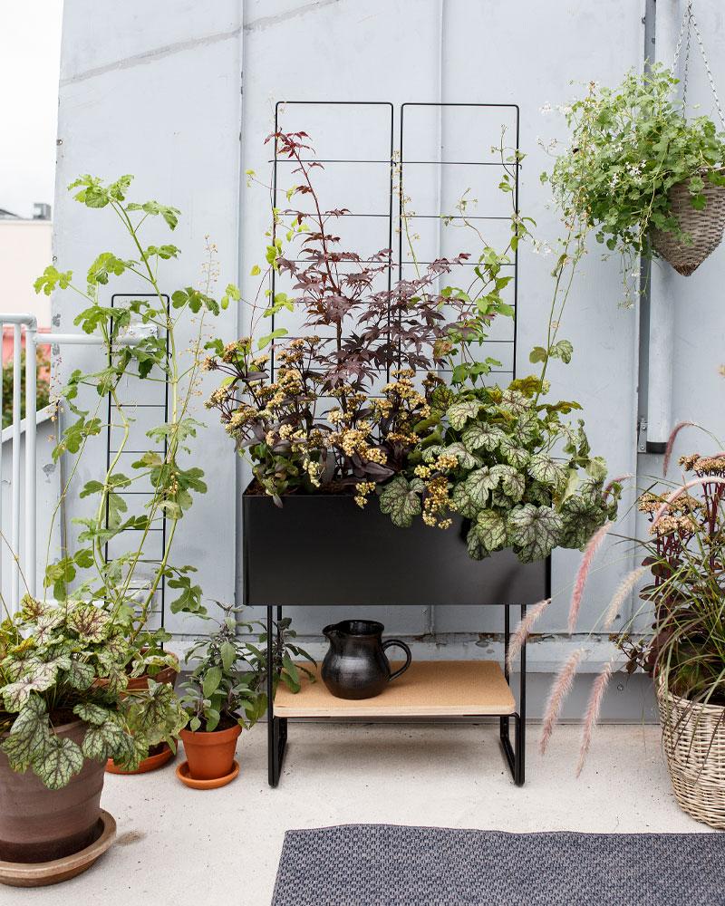 Kekkilä viherkalusteet monivuotinen puutarha parvekkeelle