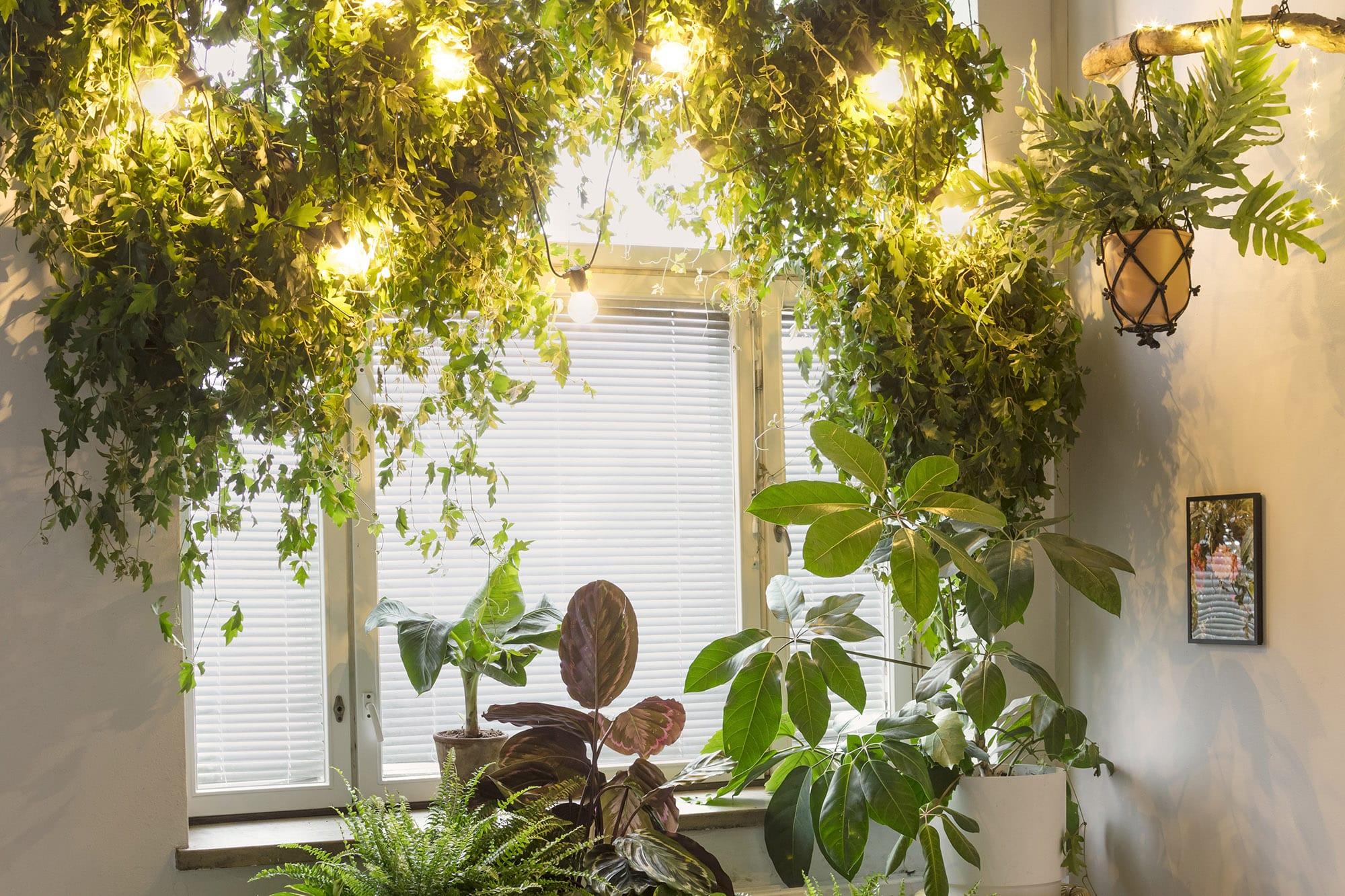 Joulutunnelma viherkasveille valoilla Kekkilä