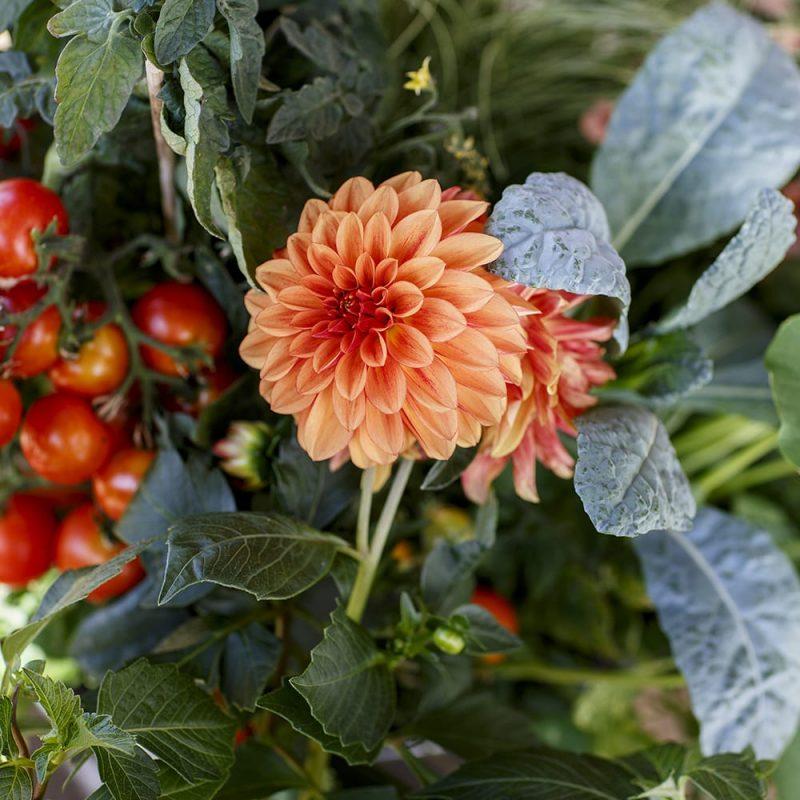Kekkilä Ruukkuviljelymulta kesäkukat ja vihannekset