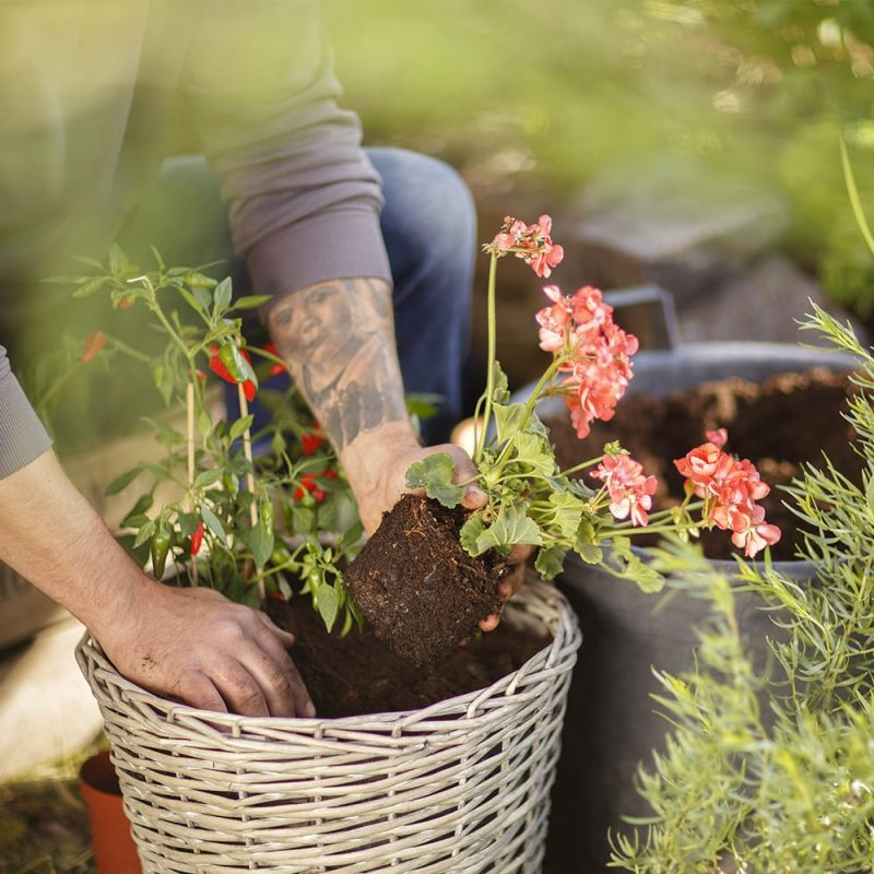 Kekkilä Ruukkuviljelymulta kesäkukat ja vihannekset istuttaminen