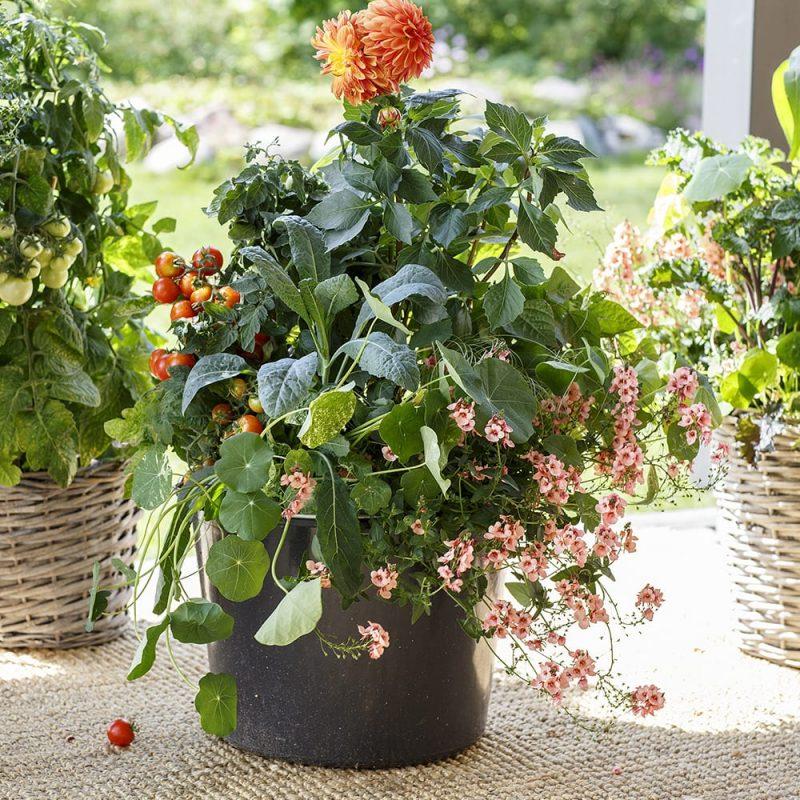 Kekkilä Ruukkuviljelymulta kesäkukat ja vihannekset ruukuissa