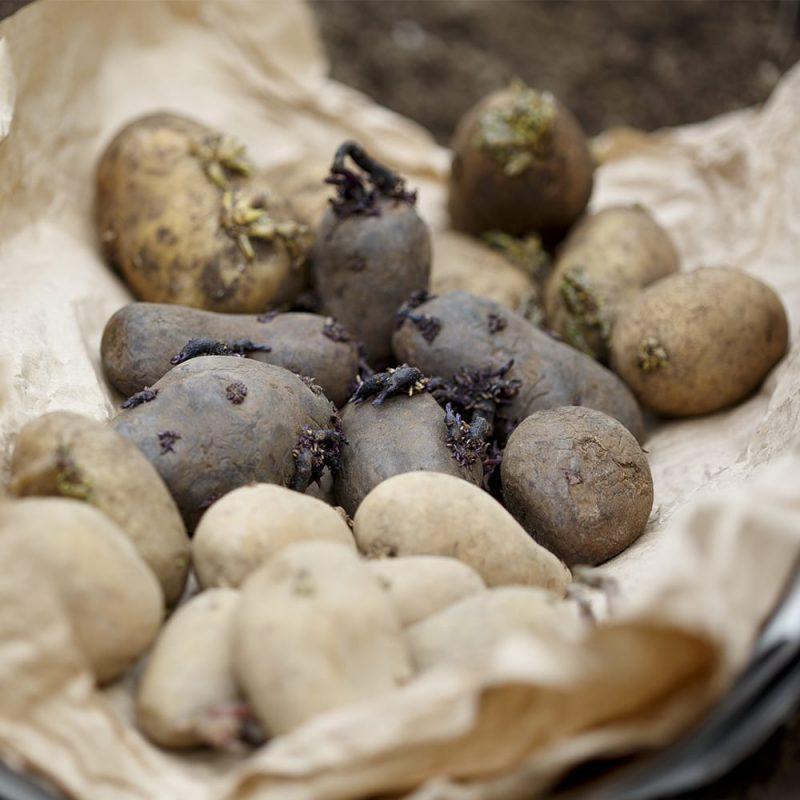 Kekkilä+Perunalannoite+luonnonmukainen+perunat