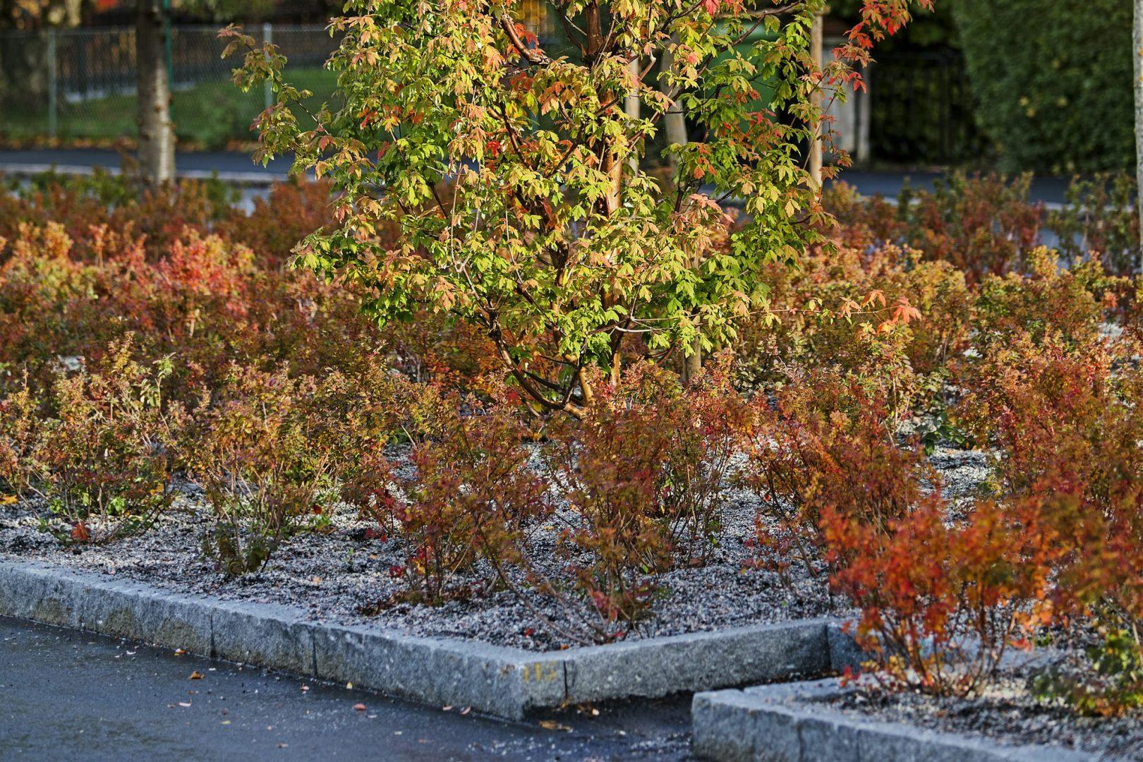 Kasvit hulevesien hallinnassa Kekkilä
