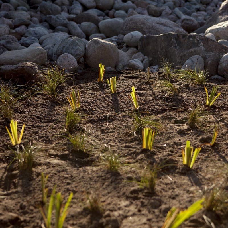 Viivyttävä kasvualusta hulevesien hallintaan Kekkiläå