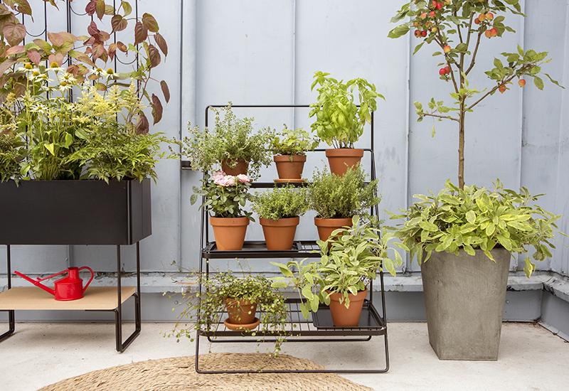 Monivuotiset kasvit, kuten perennat, köynnökset ja hedelmäpuut viihtyvät parvekeella 800x550x.jpg