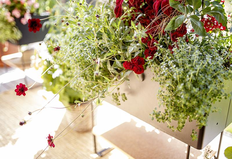 Viherlaatikossa kasvatat syötävät ja kukat 800x550x