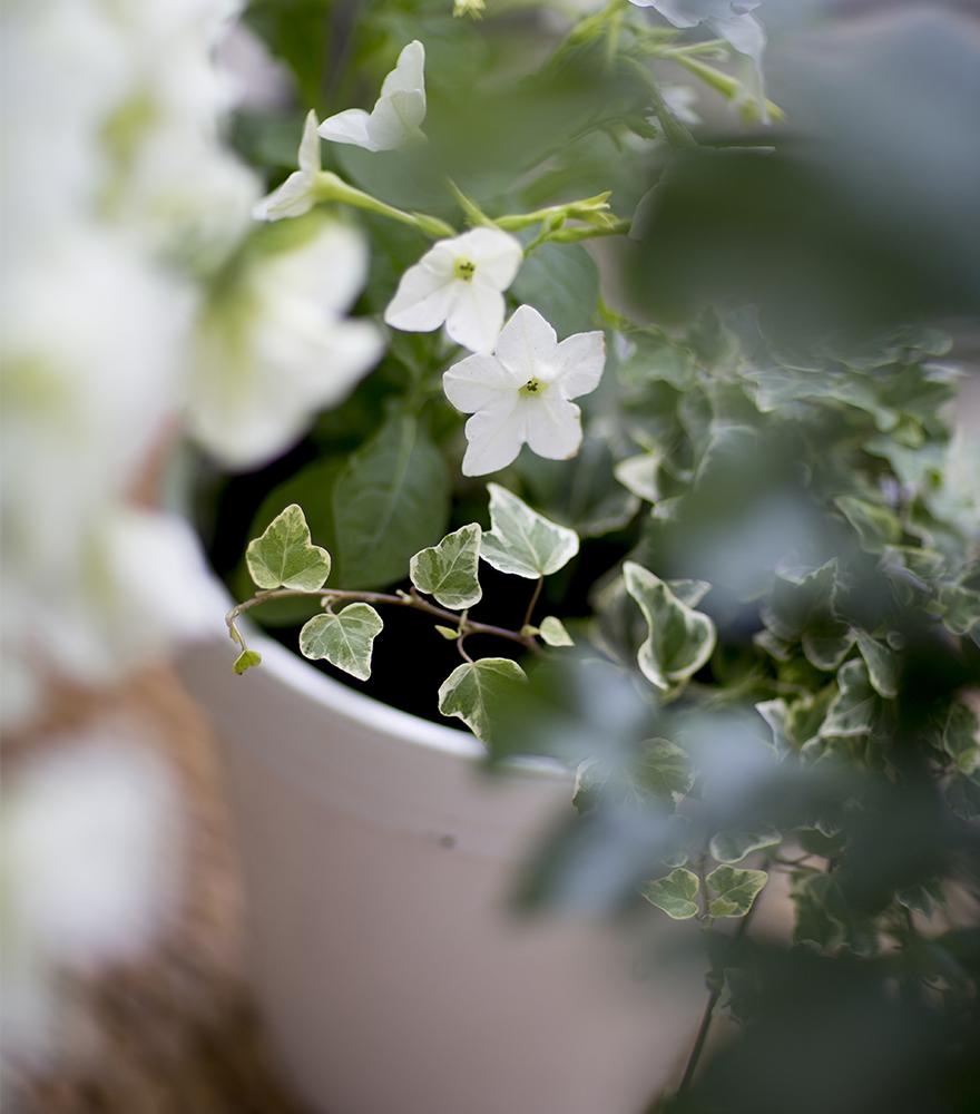 koristetupakka valkoiset kesäkukat
