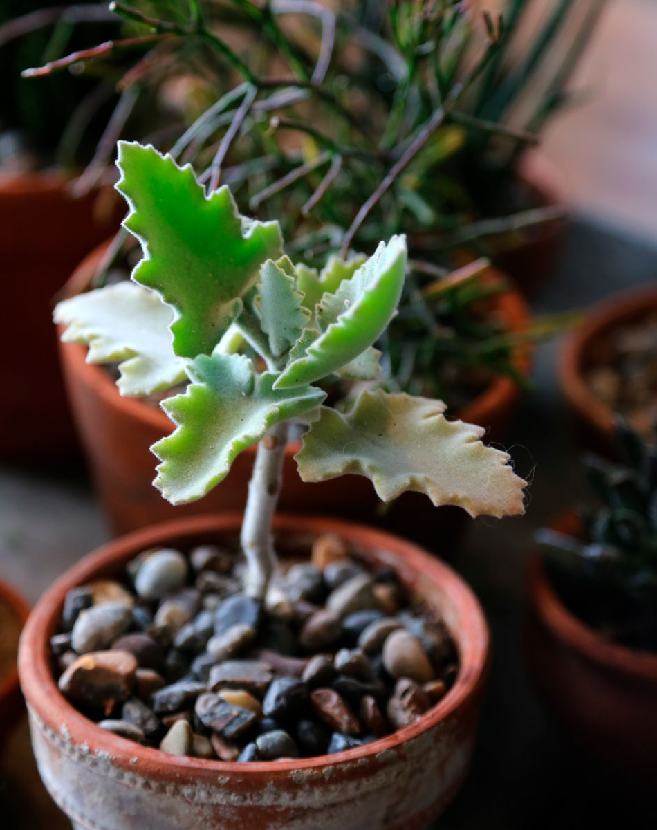 terracotta ruukku pienet viherkasvit