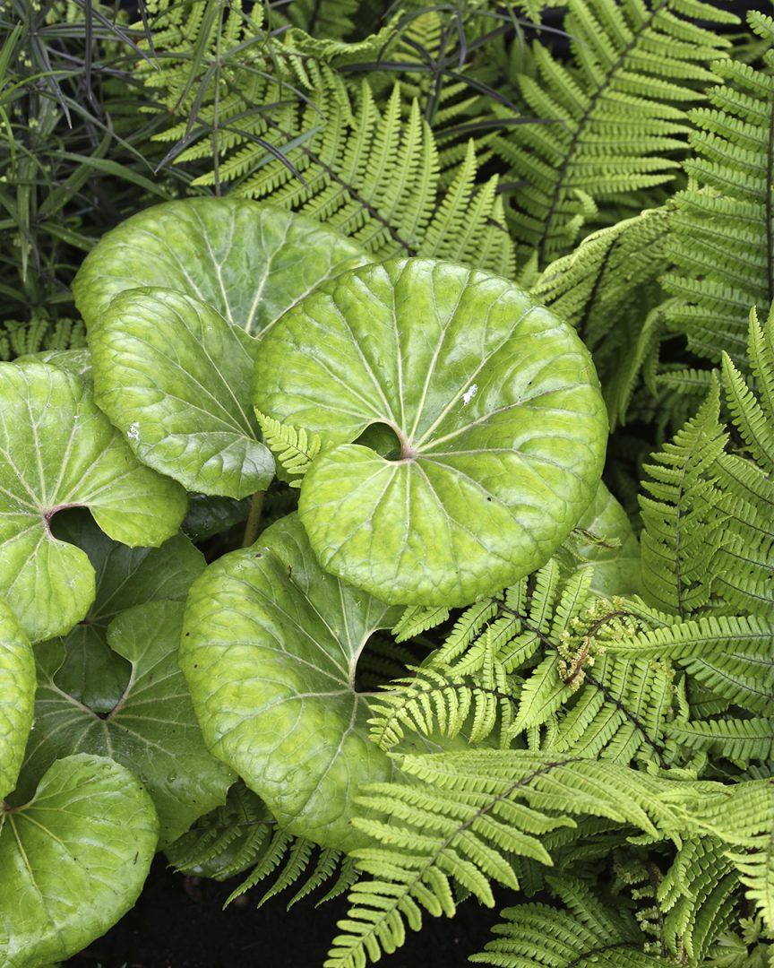Puutarhatrendejä maailmalta Yhdistä vihreää eri muodoissa ja sävyissä Kekkilä