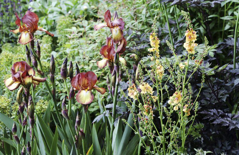 Puutarhan trendejä maailmalta Ruosteensävyt loistivat puutarhan kierrätysmateriaaleissa, mutta myös ruosteensävyisissä kurjenmiekoissa. Kekkilä