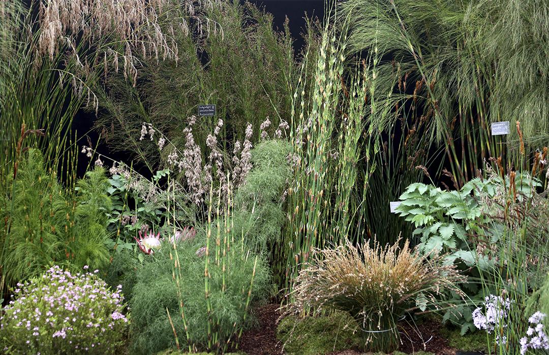 Puutarhan trendejä maailmalta. Heinät ja heinämäiset kasvit ovat olleet pitkään suosiossa. Heinien ja sarojen rinnalle nousevat myös erilaiset kortteet. Voisiko se parjattu peltokortekin olla osa puutarhan sallittua kasvillisuutta Kekkilä