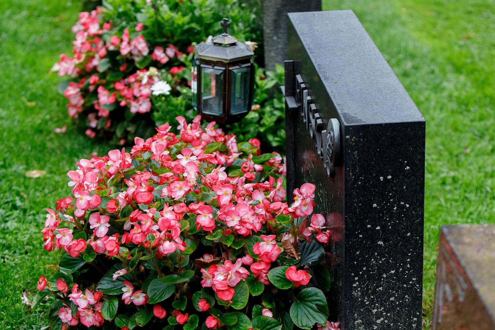 viherrakentaminen Vehreä kesäkukkamulta hautojen hoitoon