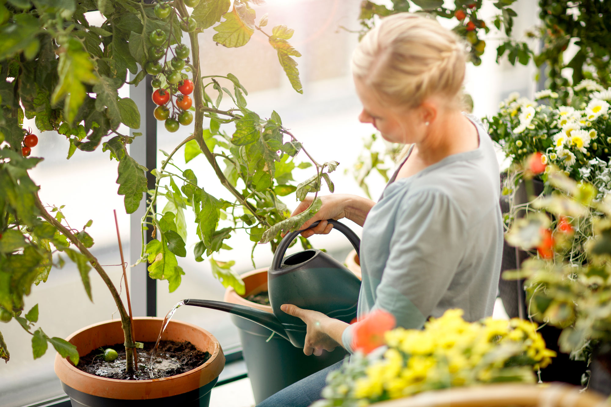 Kekkilä tomaattimulta tomaattien kasvatus parvekkeella