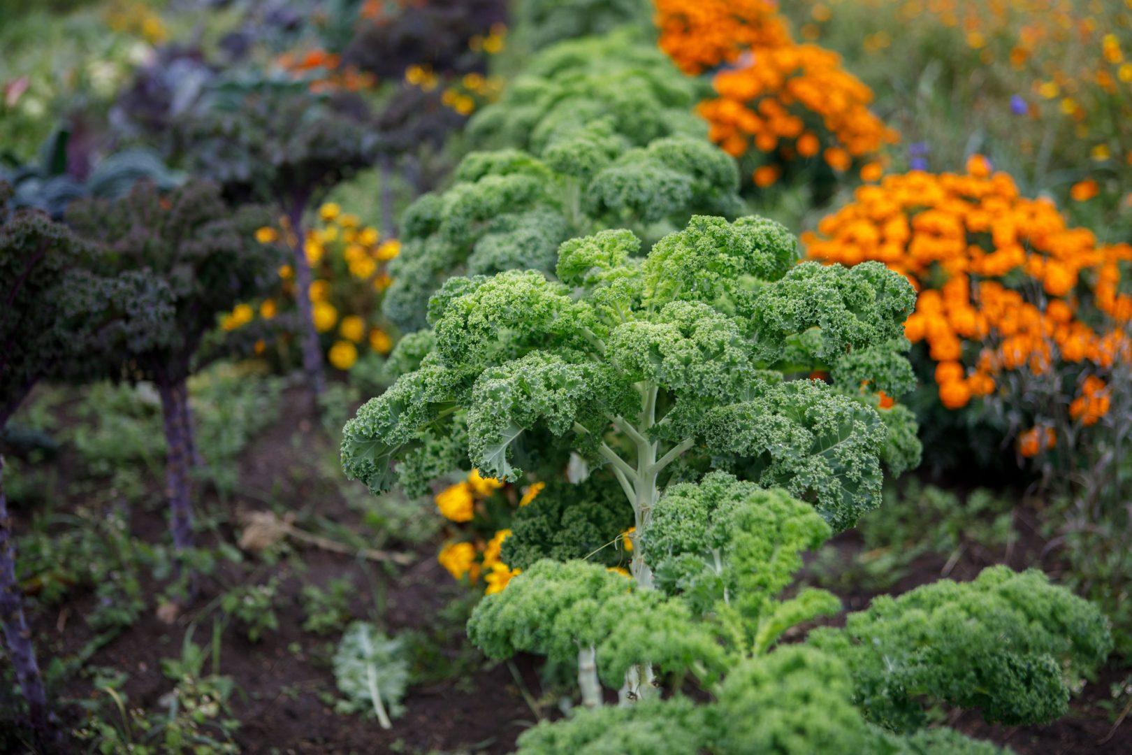 Kekkilä viherrakentaminen viljelymulta kaupunkiviljely