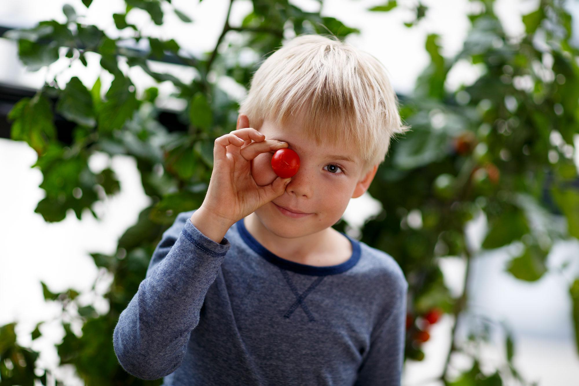 Kekkilä trendiraportti parveke tomaattien kasvatus poika