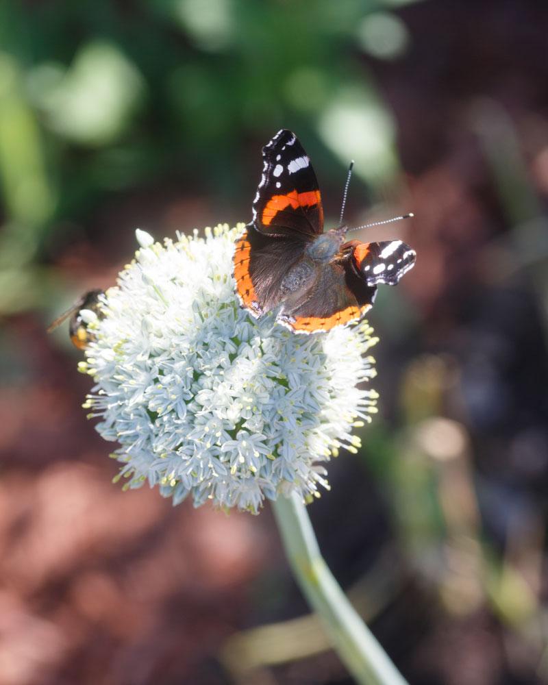 Kekkilä trendiraportti tuo luonto kotiin perhonen pölyttäjät
