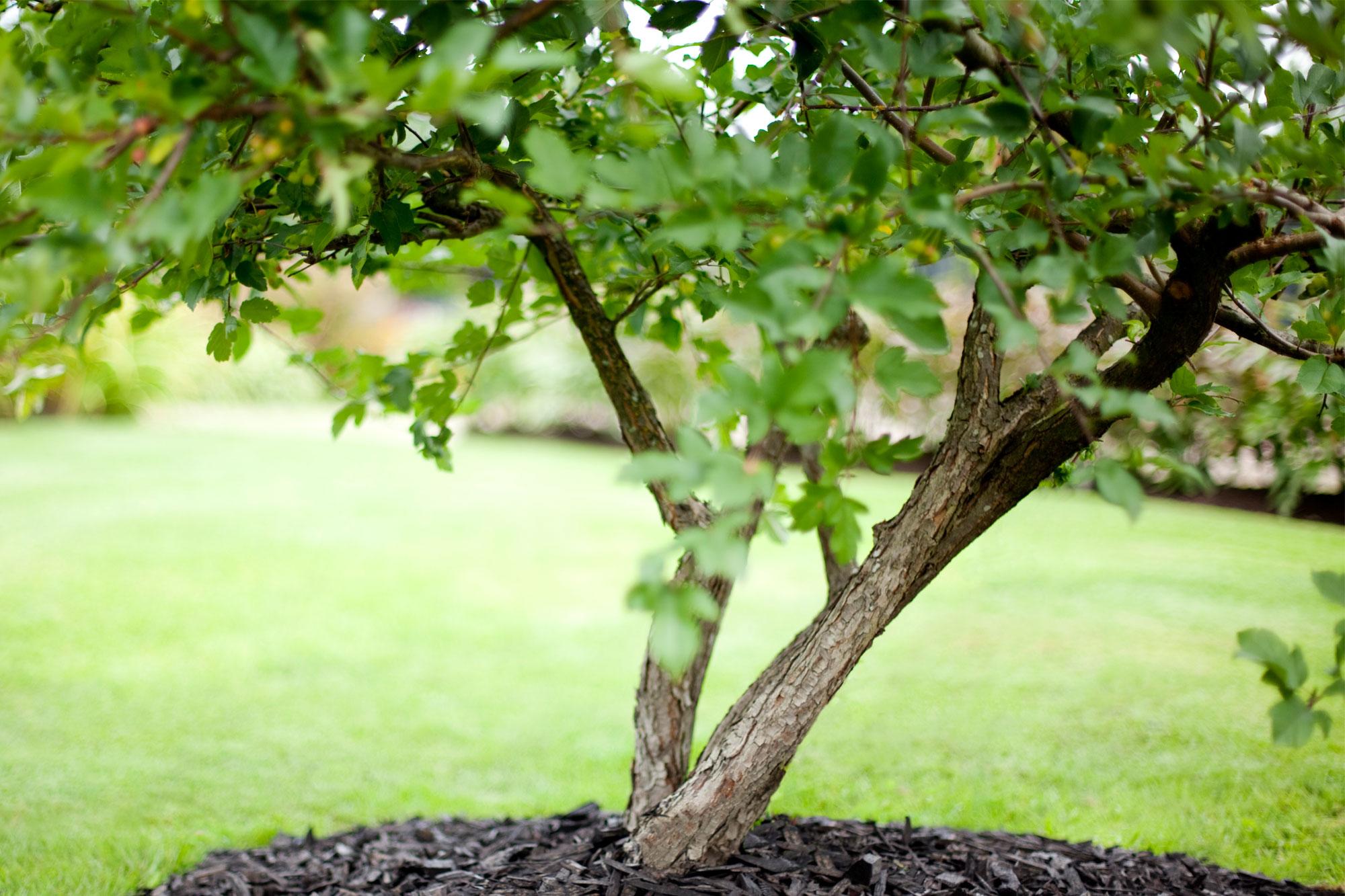 Trendiraportti kekkilä puut ilmastoteko
