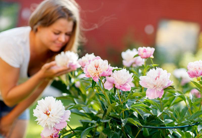 Kekkilä perenna- ja ruusumulta perennojen lannoittaminen