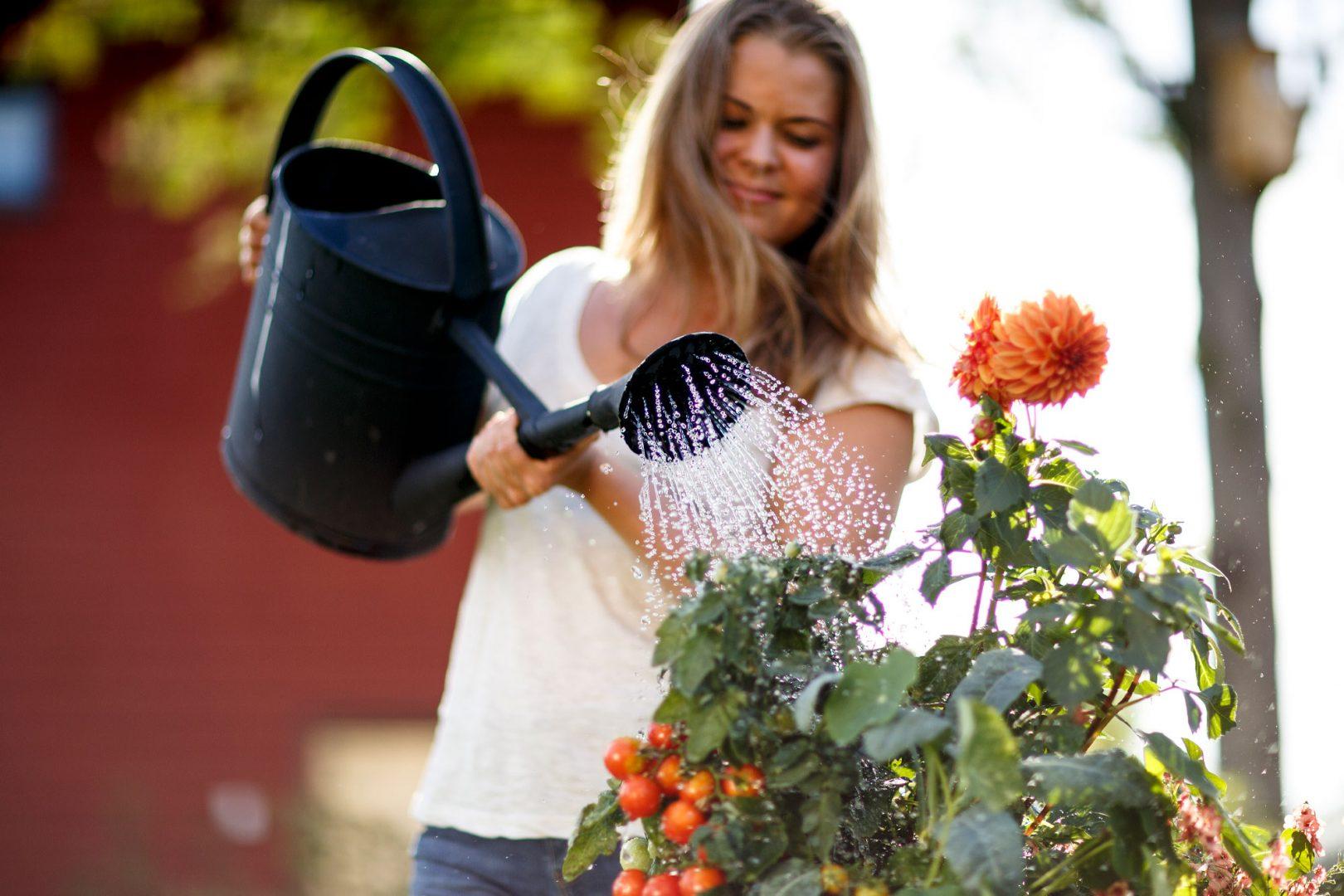 Kesäkukkien kastelu Kekkilä kesäkukkamulta helppohoitoinen puutarha
