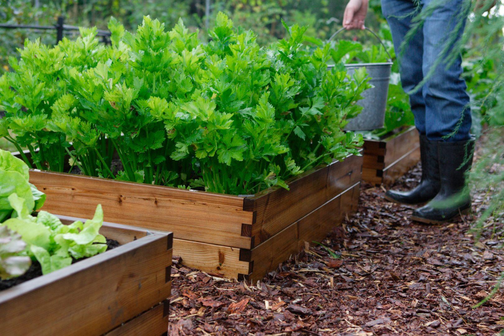 helppohoitoinen puutarha katteiden käyttö keittiöpuutarha