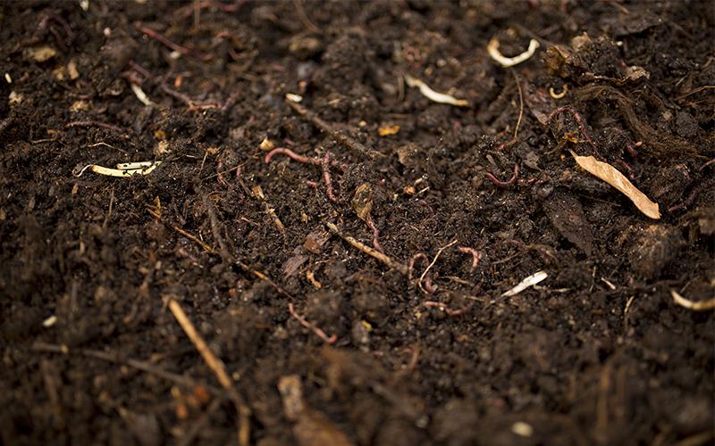 kompostilla lannoitettu multa on elävää