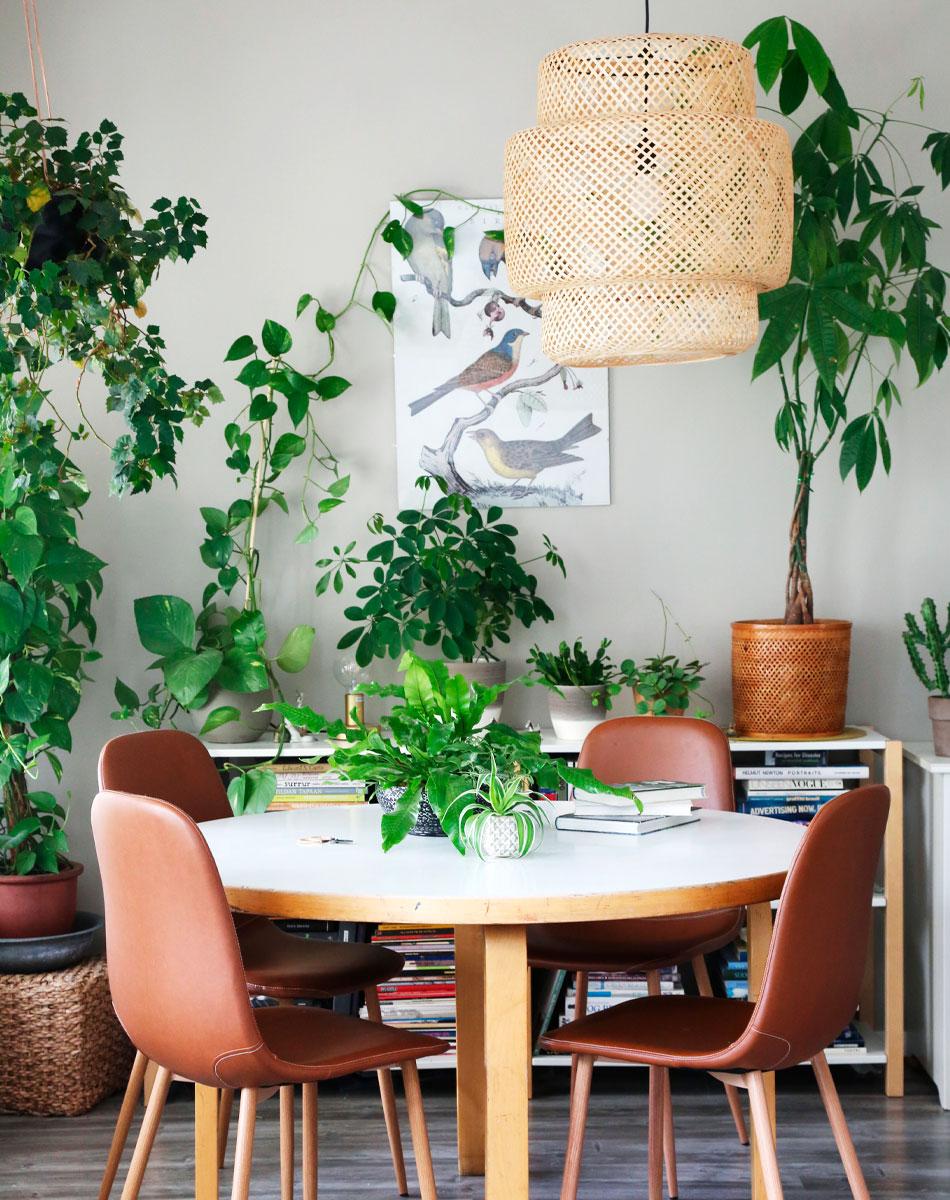 Viherkasvien hoitaminen ja kasvuolosuhteet