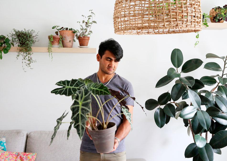 Viherkasvien kasvuolosuhteet kasvupaikka