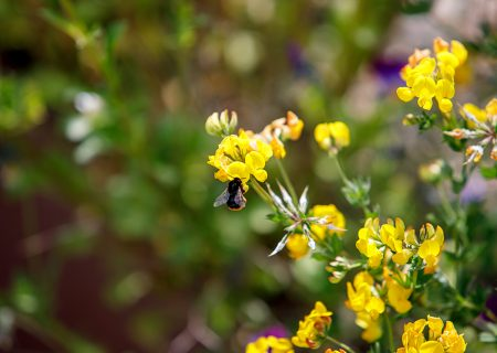 artikkelikuva niityn hoito ja perustaminen