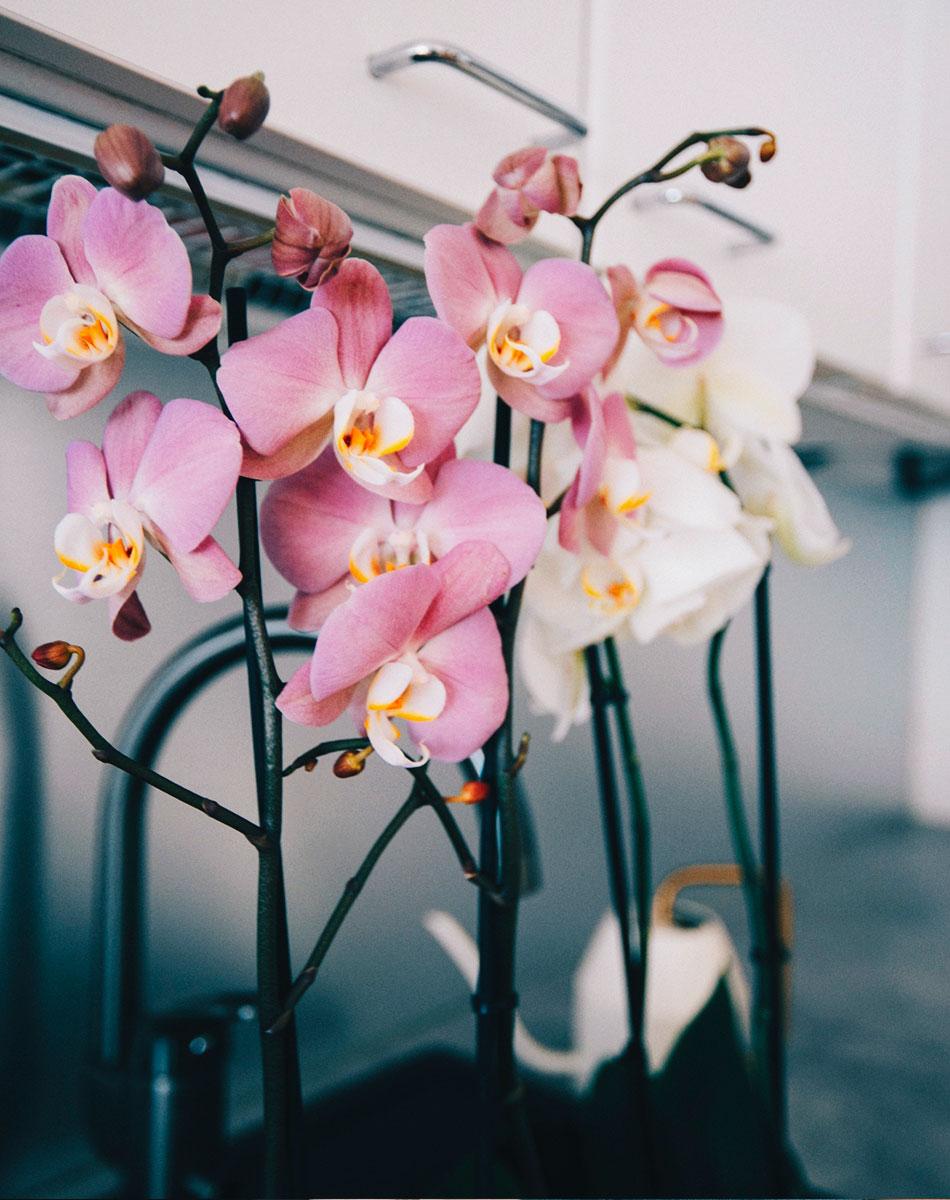 orkidea kastelu