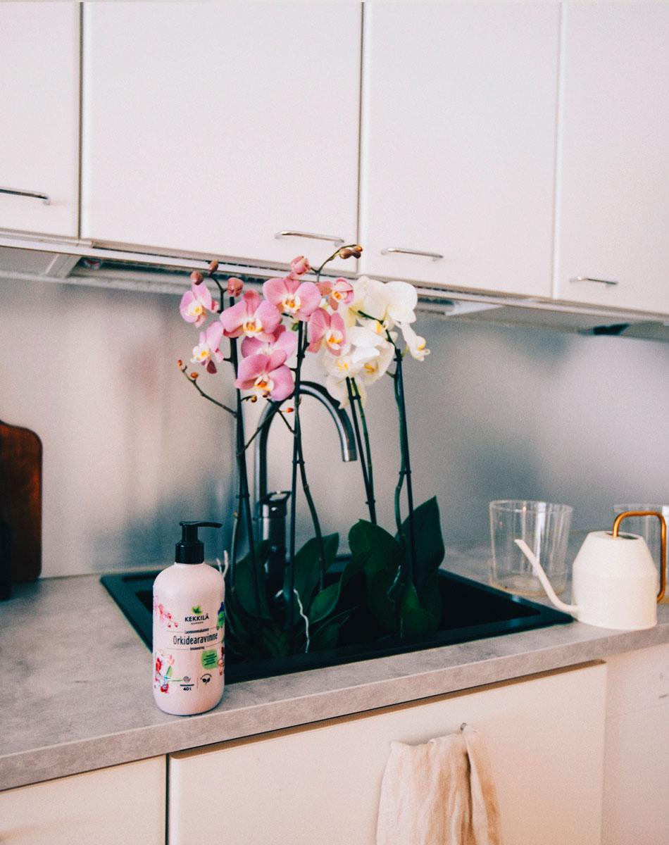orkidea kastelu ja lannoitus luonnonmukaisesti