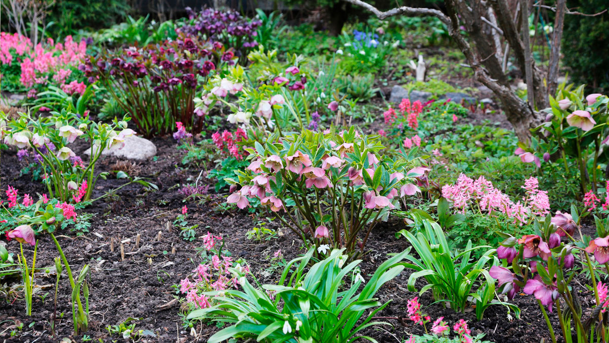 kevätpuutarha kevätperennat