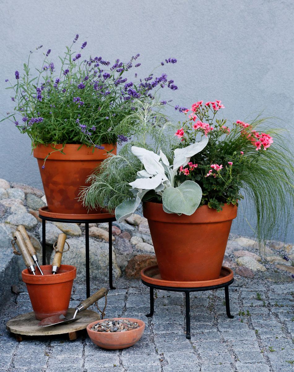 välimerellinen ruukkuistutus terracotta ruukut heinäkasvit